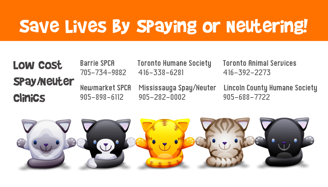 Spay-Neuter Info Card - May 2013